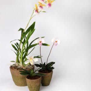 """Plante """"Spéciale Orchidée '' 1"""